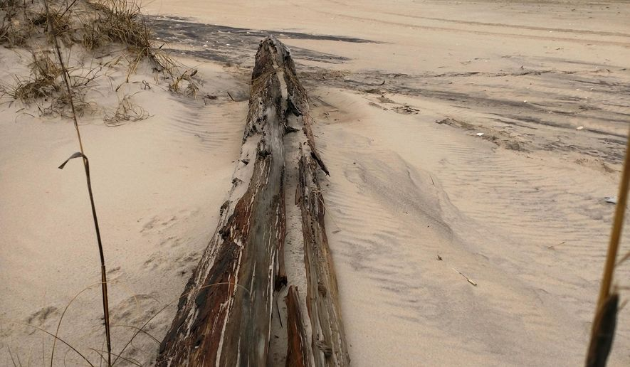 In this Monday, March 19, 2018, a lone beam believed to belong to a ship lost possibly more than a century ago rests on the dunes near Salvo, N.C. Recent storms have exposed Outer Banks shipwrecks. (Jeff Hampton/The Virginian-Pilot via AP)