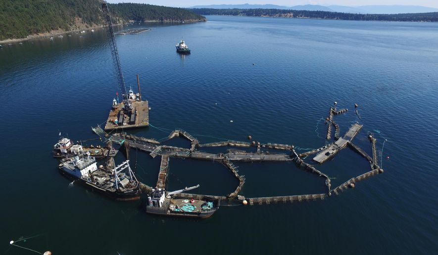 "In this Aug. 28, 2017 photo provided by the Washington State Department of Natural Resources, a crane and boats are anchored next to a collapsed ""net pen"" used by Cooke Aquaculture Pacific to farm Atlantic Salmon near Cypress Island in Washington state after a failure of the nets allowed tens of thousands of the nonnative fish to escape. Washington state will phase out marine farming of Atlantic salmon by 2022 under a bill signed Thursday, March 22, 2018 by Gov. Jay Inslee. (David Bergvall/Washington State Department of Natural Resources via AP)"