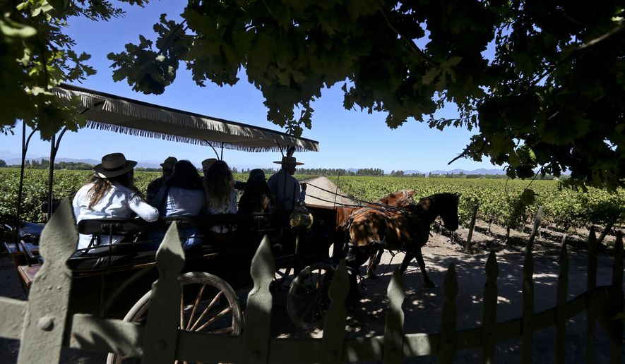 In this March 24, 2018 photo, tourists visit Viu Manent vineyard by horse-drawn carriage in Colchagua, Chile. The tourists have paid for a hands-on experience at Chile's harvest, which draws thousands of visitors each year. (AP Photo/Esteban Felix)
