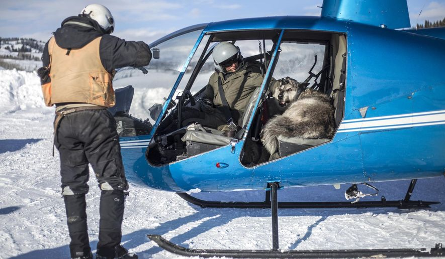 Pilot David Rivers and Kevin Coates, of Native Range Capture Services, prepare to fly a sedated gray wolf from the Dell Creek Pack back to the wilds Wednesday, Feb. 21, 2018, near Bondurant, Wyo.   The female wolf, estimated to be 7 years old, was captured and fitted with a tracking collar to help the Wyoming Game and Fish Department better understand her pack's habits and movements.  (Ryan Dorgan /Jackson Hole News & Guide via AP)