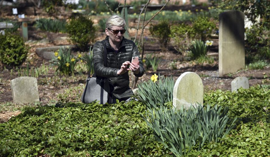 In this Saturday, March 31, 2018, photo, Michelle Jones, of Elkridge, photographs a daffodil and headstone on Daffodil Day at Whipps Historic Garden Cemetery, in Ellicott City, Md. Recent cold weather has delayed the blooming of many plants in the garden. The 1833 private cemetery was transformed into a memorial garden. (Kim Hairston/The Baltimore Sun via AP)