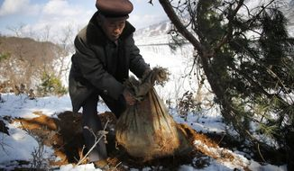 In this Dec. 3, 2015, photo, village elder Kim Ri Jun digs up a burlap sack which he claims contains the remains belonging to a soldier who fought in the Korean War from a burial site on Ryongyon-ri hill in Kujang county, North Korea. Nearly 7,800 U.S. troops remain unaccounted for from the Korean War. About 5,300 were lost in North Korea. More than six decades after they died for their country, the repatriation of the remains of thousands of U.S. troops missing in action and presumed dead from the Korean War may finally get a boost now that U.S. President Donald Trump and North Korean leader Kim Jong Un are expected to hold the first-ever summit between their two countries. (AP Photo/Wong Maye-E)