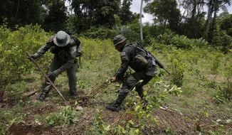 Counter narcotics police officers uproot coca shrubs in Tumaco, southern Colombia, Wednesday, April 18, 2018. (AP Photo/Fernando Vergara)
