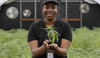 In this April 12, 2018, photo, Joy Hollingsworth, of the Hollingsworth Cannabis Company, poses for a photo, while holding a young marijuana plant in one of her company's pot growing facilities near Shelton, Wash. Hollingsworth family members own a marijuana farm south of Seattle, where they grow about 9,000 plants and employ 30 people at peak harvesting. (AP Photo/Ted S. Warren)