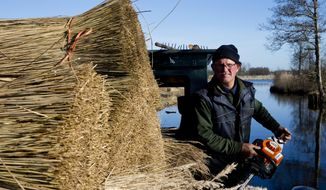 Wout van de Belt on the deck of his flat-bottomed punt next to stacks of reed in the national parc Weerribben-Rieden in Belt-Schutsloot, Netherlands, Friday, April 6, 2018. Practitioners of an ancient craft, Dutch reed cutters are seeking tax breaks to allow them to better compete with cheaper imports from China. The work cutters like Wout van de Belt carry out in the Dutch wetlands is tough, but at least they never get stuck in traffic jams as they chug in flat-bottomed punts to the stands of reed. (AP Photo/Peter Dejong)
