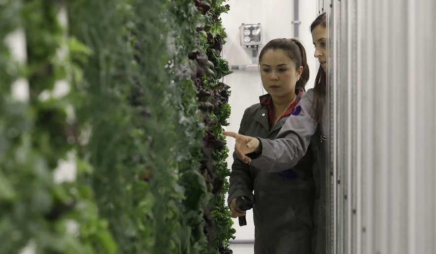 In this Jan. 18, 2018 photo, production manager Emy Kelty, left, and senior grower Molly Kreykes scan and monitor plants growing on towers in the grow room at the Plenty, Inc. office in South San Francisco, Calif. More than 30 high-tech companies from the U.S. to Singapore hoping to turn indoor farming into a major future food source, if only they can clear a stubborn hurdle: high costs.(AP Photo/Jeff Chiu)