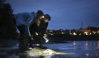 FILE - In this May 25, 2017, file photo, licensed eel fishermen Jessica Card, left, and Julie Keene shine flashlights into the water on the banks of the Penobscot River after setting a net in Brewer, Maine. America's only significant state fishery for baby eels has blown past records for value in spring 2018, as high demand from overseas aquaculture companies is driving prices to new heights. (AP Photo/Robert F. Bukaty, File)