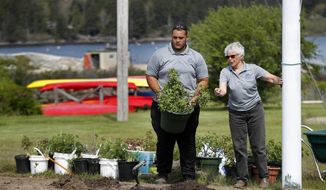 In this May 25, 2018, photo, Anthony Rios, left, works with gardener Carol Emerson at Sebasco Harbor Resort in Phippsburg, Maine. Bob Smith, owner of the resort hired a half-dozen Puerto Ricans last summer for housekeeping, landscaping and kitchen work, providing relief to his overworked staff. This summer he is doubling the number, and he would like to hire even more. (AP Photo/Robert F. Bukaty)