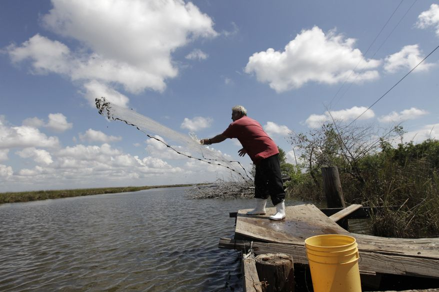Edison Dardar, an American Indian, tosses a cast net for shrimp on the edge of Pointe- aux-Chenes wildlife management area, in Isle de Jean Charles, La., Friday, Sept. 23, 2011. (AP Photo/Gerald Herbert)