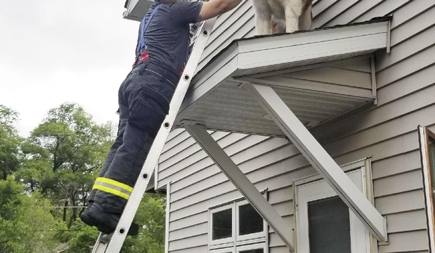 This June 8, 2018, photo provided by the Spring Lake Park-Blaine-Mounds View Fire Department, shows firefighter David O'Keeffe helping to rescue a Saint Bernard named Whiskey from a small roof above an entry door of a home in Spring Lake Park, Minn. (Anthony Scavo/Spring Lake Park-Blaine-Mounds View Fire Department via AP)