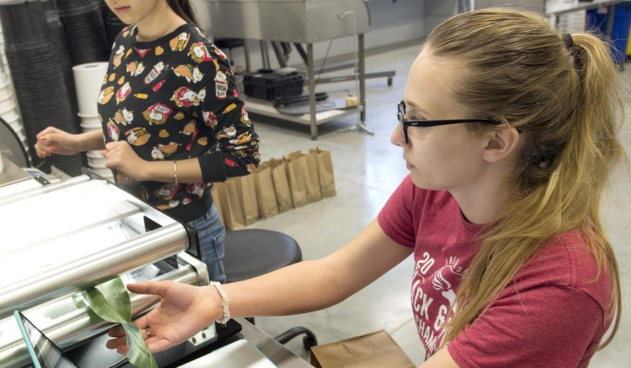 In a May 21, 2018 photo, graduate student Xiuru Dai, left, and undergraduate Alexandra Bradley use an area meter to scan a sorghum leaf as they help with a research project at UNL's Greenhouse Innovation Center in Lincoln, Neb. (Eric Gregory/Lincoln Journal Star via AP)