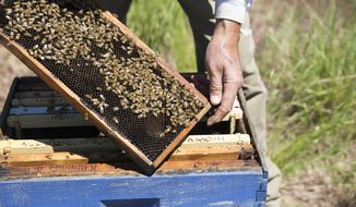 ADVANCE FOR WEEKEND EDITIONS, JUNE 23-24 - In this June 12, 2018 photo, Dennis Walker takes a look at one of his 800 beehives in Gillette, Wyo. For some, retired life is about sitting back and relaxing, but for Judy and Dennis Walker, co-owners of High Plains Honey, they're as busy as bees. (Kelly Wenzel/Gillette News Record via AP)