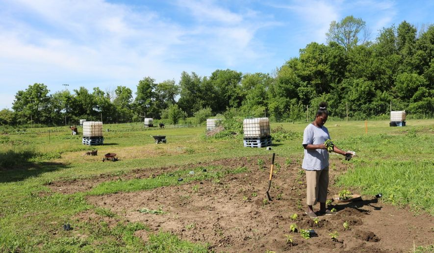 In this June 13, 2018 photo, Esther Deseh works in the community garden in Muscatine, Iowa. While putting down roots in Muscatine,  Deseh is also pulling a few out of the ground. She and other Liberian in the community plant vegetable gardens near Mulford Church. The space, plots and water supply are provided by the church. Many people garden in the early evening after work.  (Meredith Ecklund /Muscatine Journal via AP)