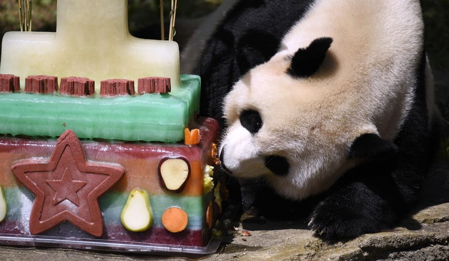 FILE - In this Aug. 20, 2016, file photo, Mei Xiang, mother of giant panda cub Bei Bei, eats Bei Bei's birthday cake at the National Zoo in Washington, during a celebration of Bei Bei's first birthday. Officials closed the David M. Rubenstein Family Giant Panda Habitat on Sunday, June 24, 2018, to give Mei Xiang some quiet time because she is exhibiting behaviors that are in line with both a pregnancy and false pregnancy. (AP Photo/Sait Serkan Gurbuz, File)