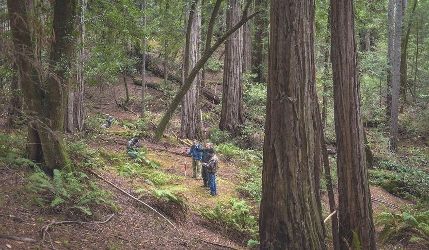 Save The Redwoods League board member John Montague, left, is joined by Todd McMahon, vice president of NCRM Inc., an environmental consulting firm that helps manage League projects and writer Glen Martin as they stand among the mature redwoods of Harold Richardson Redwoods Reserve in Stewarts Point, Calif., March 28, 2018. The grove in Northern California with hundreds of ancient redwood trees, some taller than the Statue of Liberty, is being acquired by environmental group Save the Redwoods League that plans to preserve it and open a new public park, the group announced Tuesday, June 26, 2018. (Mike Shoys/Save the Redwoods League via AP)