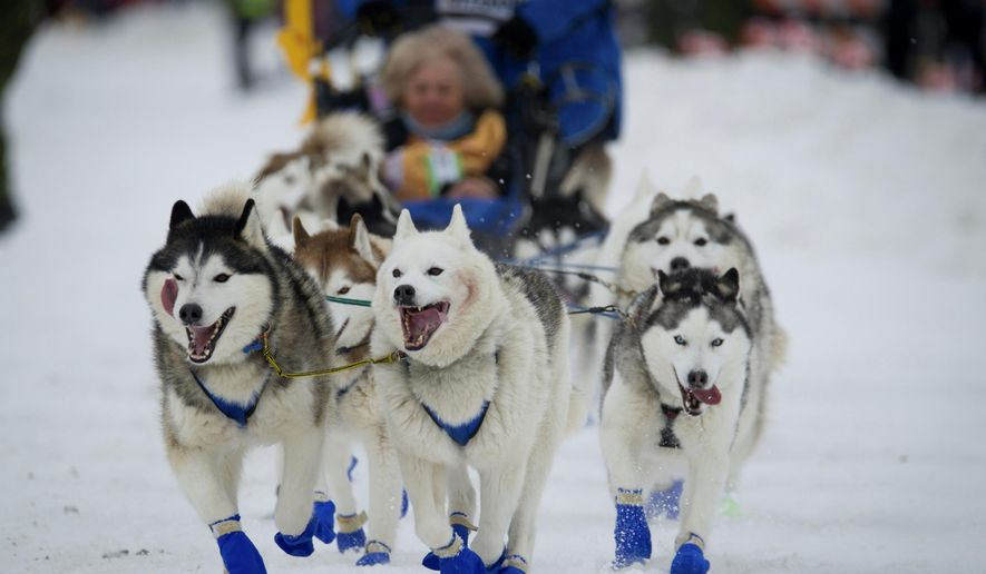 FILE - In this March 3, 2018, file photo, Eagle River, Alaska musher Tom Schonberger's lead dogs trot along Fourth Avenue during the ceremonial start of the Iditarod Trail Sled Dog Race in Anchorage, Alaska. Animal rights activists are toasting the maker of Jack Daniel's whiskey, saying the company has ended its long-running sponsorship of Alaska's 1,000-mile race. The action follows a tough year for race organizers who have faced financial hardships, a loss of other sponsors and their first-ever dog doping scandal. (AP Photo/Michael Dinneen, Fie)