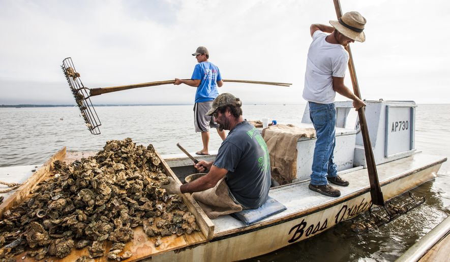 FILE- In this April 2, 2015, file photo, John Stokes, center, culls Apalachicola oysters while his two sons Ryan, left, and Wesley Stokes tong oysters from the bottom of Apalachicola Bay. The Supreme Court is giving Florida another chance to make its case that Georgia uses too much water and leaves too little for its southern neighbor. The justices ruled 5-4, Wednesday, June 27, 2018, in the long-running dispute between the two states. The court said that a special master appointed to hear the lawsuit should reconsider Florida's argument that limiting how much water Georgia uses would provide more for the Apalachicola river that flows into Apalachicola Bay and the nearby Gulf of Mexico. (AP Photo/Mark Wallheiser, File)