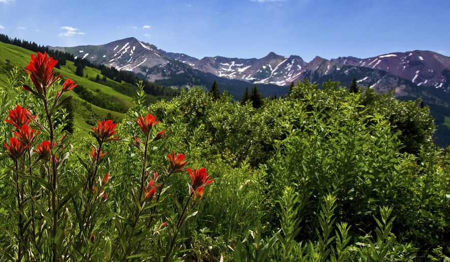 ADVANCE FOR USE IN WEEKEND EDITIONS JUNE 30-JULY 1, 2018 AND THEREAFTER. In this July 3, 2017 photo, Indian paintbrush blooms on a hillside in the Washington Gulch area outside Crested Butte, Colo. The Crested Butte Wildflower Festival, is a weeklong celebration that starts July 6, 2018. (Christian Murdock/The Gazette via AP)