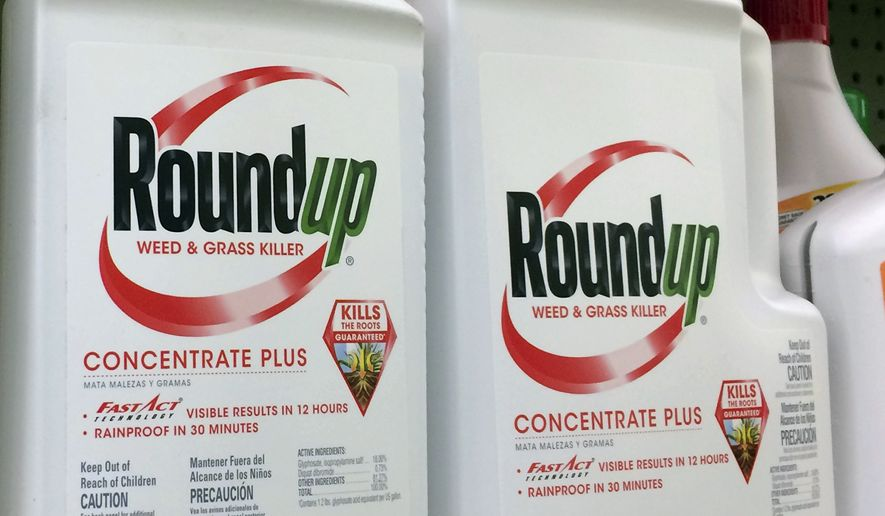 FILE - This Jan. 26, 2017, file photo shows containers of Roundup, a weed killer made by Monsanto, on a shelf at a hardware store in Los Angeles. Lawyers for a school groundskeeper dying of cancer asked a San Francisco jury during a trial Monday, July 9, 2018, to find that agribusiness giant Monsanto's widely used weed killer Roundup likely caused his disease.  (AP Photo/Reed Saxon, File)