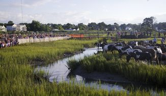 FILE - In a Wednesday, July 26, 2017 file photo, spectators catch a first glimpse of the Chincoteague Ponies on shore during the 92nd annual Chincoteague Pony Swim in Chincoteague, Va. NASA officials say it could take years to understand the extent of contamination at its Wallops Island site from a family of chemicals that has made its way into the drinking water for the nearby town of Chincoteague. NASA has provided supplemental water since PFAS was discovered in the water supply. (Allison Hess/The Virginian-Pilot via AP, File)