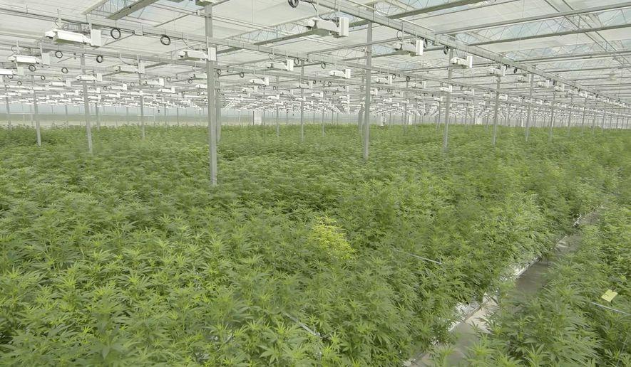 This June 2018 photo provided by Tilray shows their subsidiary High Park Farms facility, a 13 acre greenhouse, in Enniskillen, Canada. (Tilray via AP)
