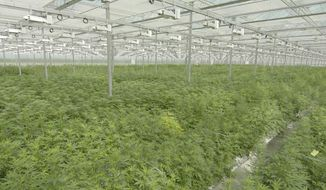 This June 2018 photo provided by Tilray shows their subsidiary High Park Farms facility, a 13 acre greenhouse, in Enniskillen, Canada. (Tilray via AP)