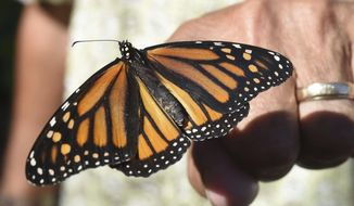 FILE - In this Oct. 20, 2017, file photo, John Miano of Destin, Fla., holds a monarch butterfly on his fingertip as he waits for the newly tagged insect to take flight during the Panhandle Butterfly House's Monarch Madness festival in Navarre, Fla. The Trump administration is proposing changes to the government's endangered species program that wildlife advocates say could make it harder to protect monarchs. (Devon Ravine/Northwest Florida Daily News via AP, File)