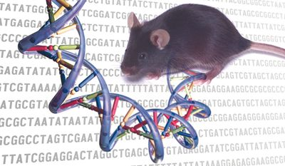 Image courtesy of  the National Human Genome Research Institute, a federal agency within the National Institutes of Health (NIH).