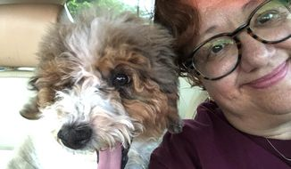 This July 19, 2018 photo made available by Ray Haneski shows his wife Diana with River, a female Bernese mountain dog-poodle mix, in Coral Springs, Fla. Diana is a library media specialist at Marjory Stoneman Douglas High School, where she helped shelter 50 kids during the attack on Valentine's Day. Haneski will take River to school and make her available to anyone who needs comfort. (Ray Haneski via AP)