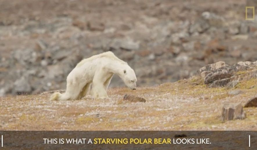 "National Geographic contributing photographer and speaker Cristina Mittermeier acknowledged Thursday that her now-viral photographs of a starving polar bear went ""too far"" in linking the bear's condition to the effects of climate change. (National Geographic)"