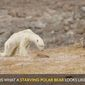 """National Geographic contributing photographer and speaker Cristina Mittermeier acknowledged Thursday that her now-viral photographs of a starving polar bear went """"too far"""" in linking the bear's condition to the effects of climate change. (National Geographic)"""