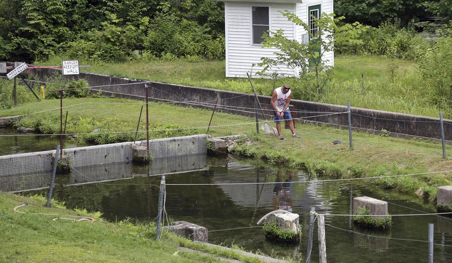 In this Wednesday, Aug. 1, 2018 photo, a worker repairs fencing at the Powder Mill Fish Hatchery in New Durham, N.H. The Conservation Law Foundation announced it plans to sue the state of New Hampshire over allegations that runoff from the facility is polluting nearby rivers and lakes. (AP Photo/Elise Amendola)