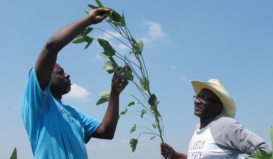 In this June 25, 2018, photo, Tyrone Grayer, left, and David Allen Hall inspect a soybean plant at their farm in Parchman, Miss. Hall and Grayer are among a group of black farmers in Tennessee and Mississippi who are suing Stine Seed Co., claiming the seeds were switched and they were given faulty, low-yield seeds. (AP Photo/Adrian Sainz)