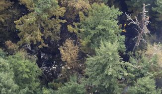 Workers wearing yellow hard hats are seen at upper right from the air Saturday, Aug. 11, 2018, near Steilacoom, Wash., at the site on Ketron Island in Washington state where an Horizon Air turboprop plane crashed Friday after it was stolen from Sea-Tac International Airport. Investigators were working to find out how an airline employee stole the plane and crashed it after being chased by military jets that were quickly scrambled to intercept the aircraft. (AP Photo/Ted S. Warren)