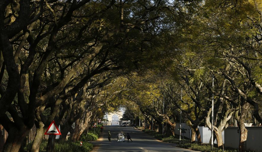 Trees line a street in a Johannesburg suburb, Sunday, Aug. 12, 2018. One of the world's largest urban forests is under threat from the polyphagous shot hole borer beetle which is thought to have made its way from Southeast Asia on packing crates or through the movement of plant materials. Many of the city's estimated 6 to 10 million tress are dying and no one has found a way to combat the pest. (AP Photo/Denis Farrell)