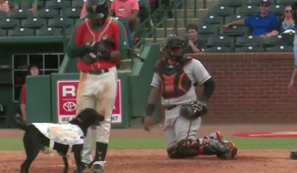 Greensboro Grasshoppers bat dog Miss Lou Lou Gehrig interrupts a ballgame. (Video screenshot courtesy of Instagram / @milb)