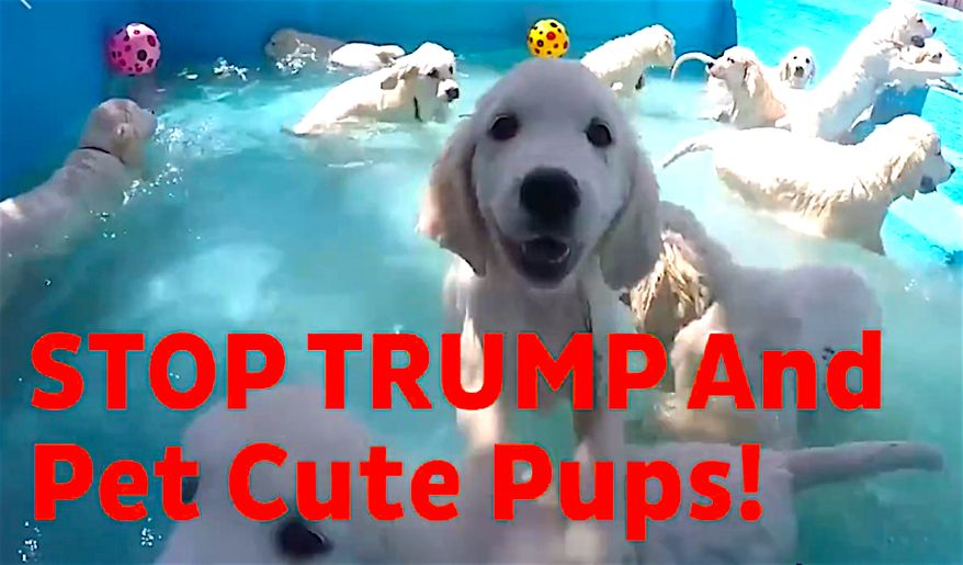 A new Democratic outreach on the nation's college campuses uses therapy dogs and puppies to persuade students to register to vote and head to the polls. (Screen grab from Pups at the Polls Pennsylvania video)
