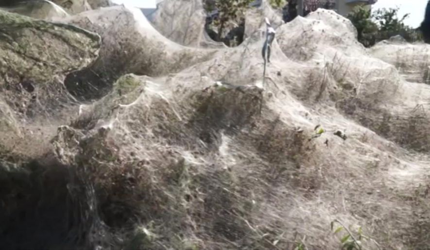 In this frame grab taken from video on Sept. 18, 2018, a view of spider webs over bushes, in Aitoliko, Greece. Spurred into overdrive by an explosion in the populations of insects they eat, thousands of little spiders in the western Greek town have shrouded coastal trees, bushes and low vegetation in thick webs. The sticky white lines extend for a few hundred meters (yards) along the shoreline of Aitoliko, built on an artificial island in a salt lagoon near Missolonghi, 250 kilometers (150 miles) west of Athens. (Giannis Giannakopoulos via AP)