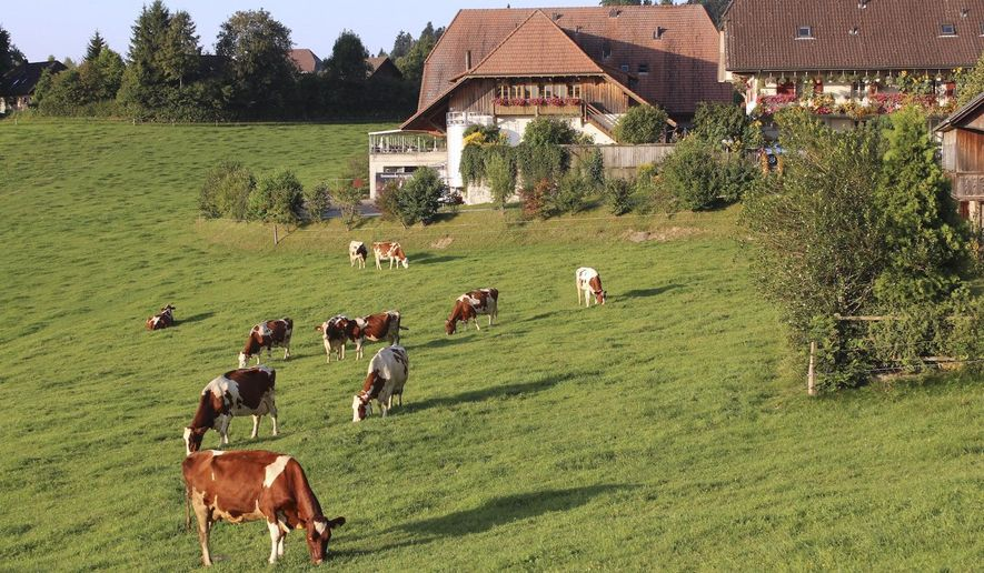 FILE - In this Aug. 23, 2011, file photo, dairy cows graze on grass in the Emmental region of Switzerland. Swiss voters are deciding on two separate proposals aimed to protect Swiss farmers more and ensure that food from both domestic and foreign farmers and producers is healthier, more environmentally sound and animal-friendly. (AP Photo/Mark D. Carlson, File)