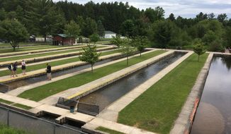 This June 9, 2018 photo shows the Grayling Fish Hatchery on the Au Sable River in Grayling, Mich. Under an agreement announced Sept. 27, 2018,  Harrietta Hills Trout Farm LLC will shut down its commercial aquaculture operation at the hatchery and a sport fishing group called Anglers of the Au Sable will run it as a tourist attraction. (AP Photo/John Flesher)