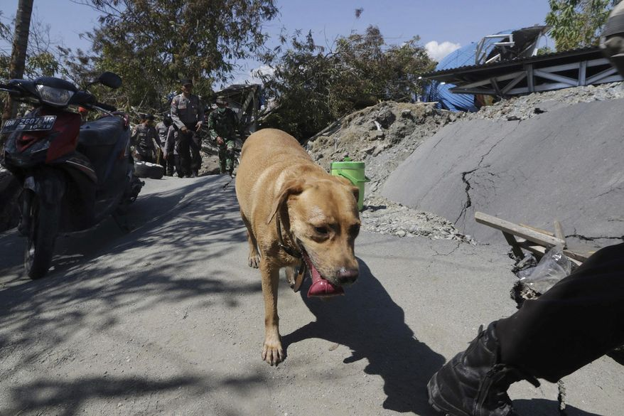An Indonesian police officer leads a sniffer dog during a search for earthquake victims at Petobo village in Palu, Central Sulawesi, Indonesia, Monday, Oct. 1, 2018. A mass burial of earthquake and tsunami victims was being prepared in a hard-hit city Monday as the need for heavy equipment to dig for survivors of the disaster that struck a central Indonesian island three days ago grows desperate. (AP Photo/Chandra)