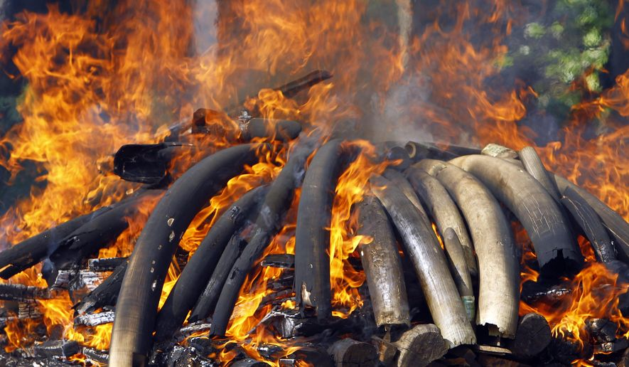 Smokes and flames billow from burning elephant ivory during a destruction ceremony of confiscated elephant ivory and wildlife parts in Naypyitaw, Myanmar, Thursday, Oct. 4, 2018. Myanmar destroyed confiscated elephant ivories and various of other wildlife parts in the capital Naypyitaw for public awareness of law enforcement on illegal trade of wild fauna and flora, and their derivatives and promoting international cooperation by delivering Myanmar's great suppression on illegal wildlife crimes. (AP Photo/Aung Shine Oo)