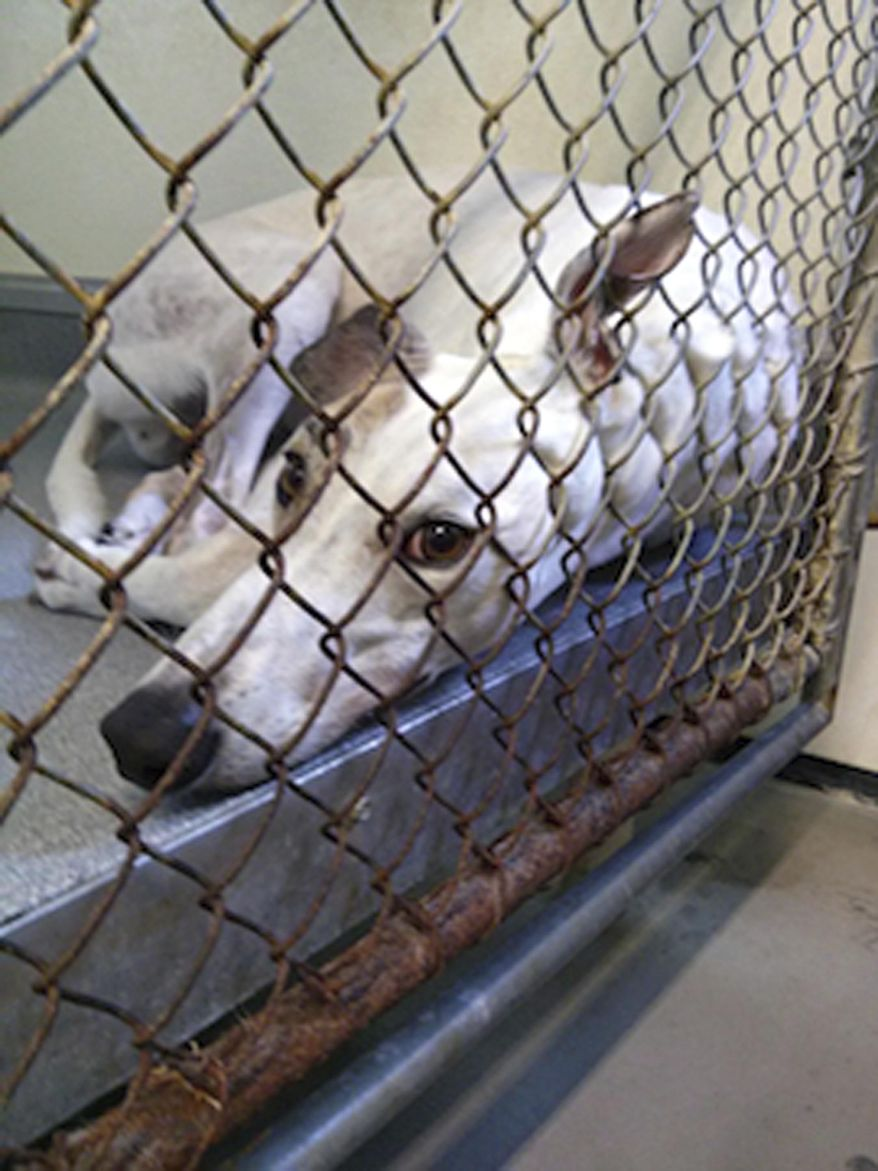 People for the Ethical Treatment of Animals operates a shelter in Virginia with a 72.8% kill rate in 2014. (Associated Press/File)