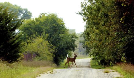 A Whitetail buck crosses one of the few roads in the former Savanna Army Depot/Lost Mound Unit. (Kevin E. Schmidt/Quad City Times via AP)