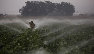"In this Tuesday, Sept. 4, 2018, photo, sprinklers run as a farmworker walks through a broccoli field in Salinas, Calif. Like many California cities, Salinas, dubbed the ""Salad Bowl of the World"" because the surrounding farmland produces most of the lettuce on Earth, suffers from a lack of available affordable housing and space to build more. Housing prices have exploded, with the median cost of a home now $549,000, according to Zillow. (AP Photo/Jae C. Hong)"