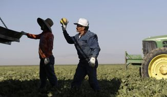 In this Thursday, Sept. 20, 2018 photo, farmworker Melesio Gonzalez, center, picks melons near Five Points, Calif. The region is unrivaled for farm production, but the rich earth has not given back equally to those who toil out of view of millions of tourists and Californians who pass through the valley each year. (AP Photo/Marcio Jose Sanchez)