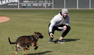 Boston Red Sox pitcher Rick Porcello plays with his four-month-old puppy, Bronco, during a baseball workout at Fenway Park, Sunday, Oct. 21, 2018, in Boston. The Red Sox are preparing for Game 1 of the baseball World Series against the Los Angeles Dodgers scheduled for Tuesday in Boston. (AP Photo/Elise Amendola)