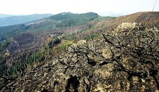 FILE-  In this Sept. 8, 2002, file photo, wildfire damage from the Biscuit Fire is shown on Snow Camp Mountain near Agness, Ore. A Portland, Ore., couple has spent years clearing the wild and remote Trans-Kalmiopsis Trail with hand tools after the raging wildfire destroyed much of it in 2002. (AP Photo/Jeff Barnard, File)