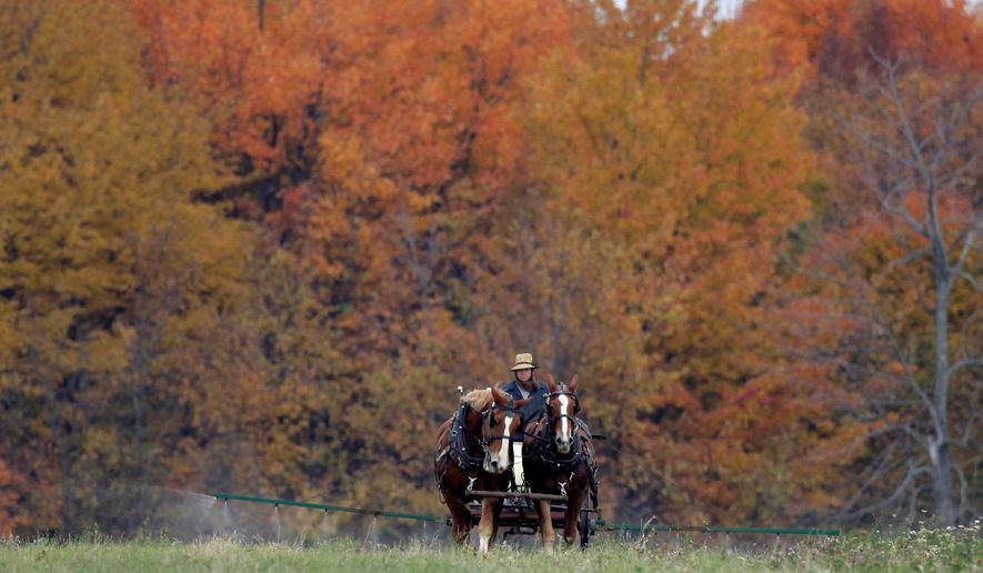 Amid a wash of Fall color from the surrounding trees, an Amish farmer and his team spray a field in Middlefield, Ohio on Thursday, Oct. 22, 2009.   (AP Photo/Amy Sancetta)