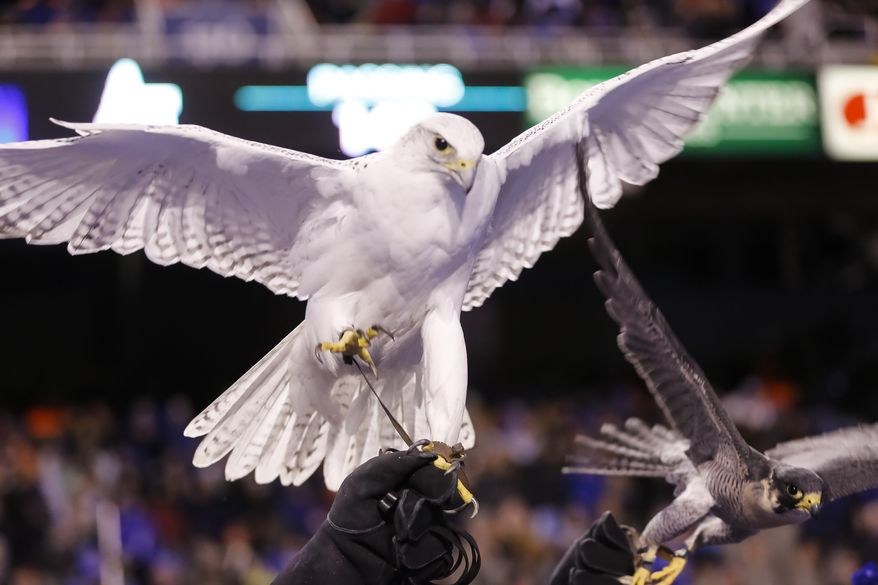 Air Force falcon mascots spread their wings during the first half of an NCAA college football game against Boise State in Boise, Idaho, on Friday, Nov. 20, 2015. Air Force won 37-30. (AP Photo/Otto Kitsinger)